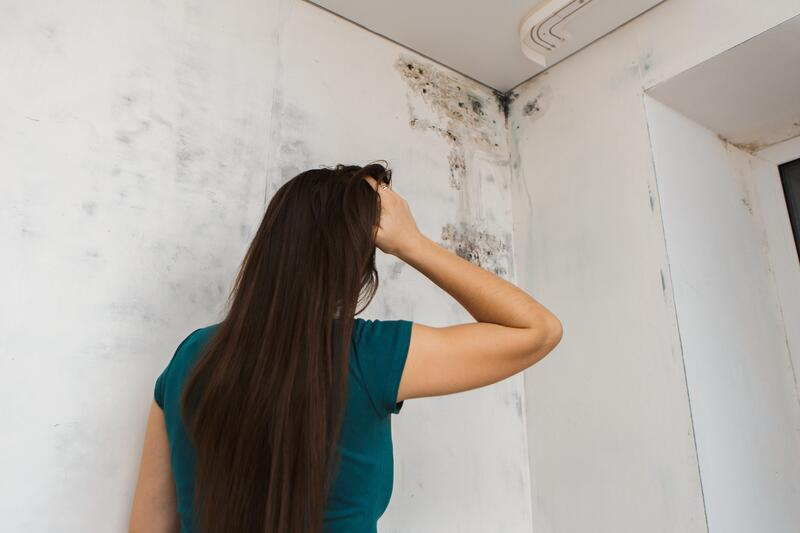 mold_in home