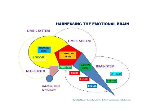 Kuno_emotional_brain2.jpg