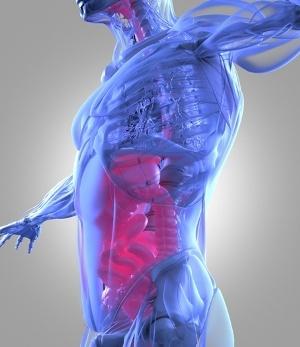 microbiome2gut_AdobeStock_114179143.jpeg