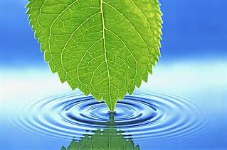 leaf_and_water.jpg