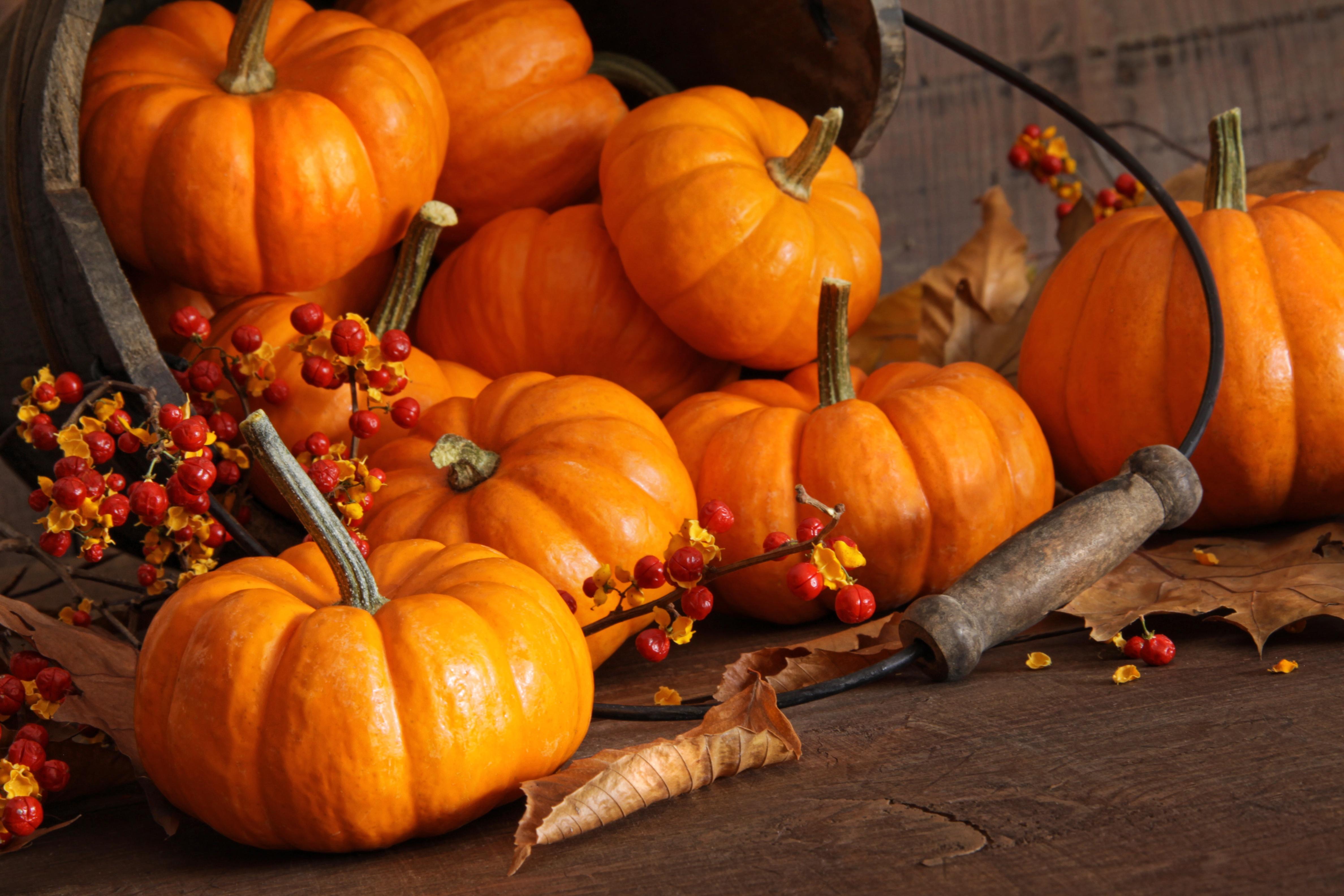 pumpkin_fall_thanksgiving_harvest_AdobeStock_27116564.jpeg